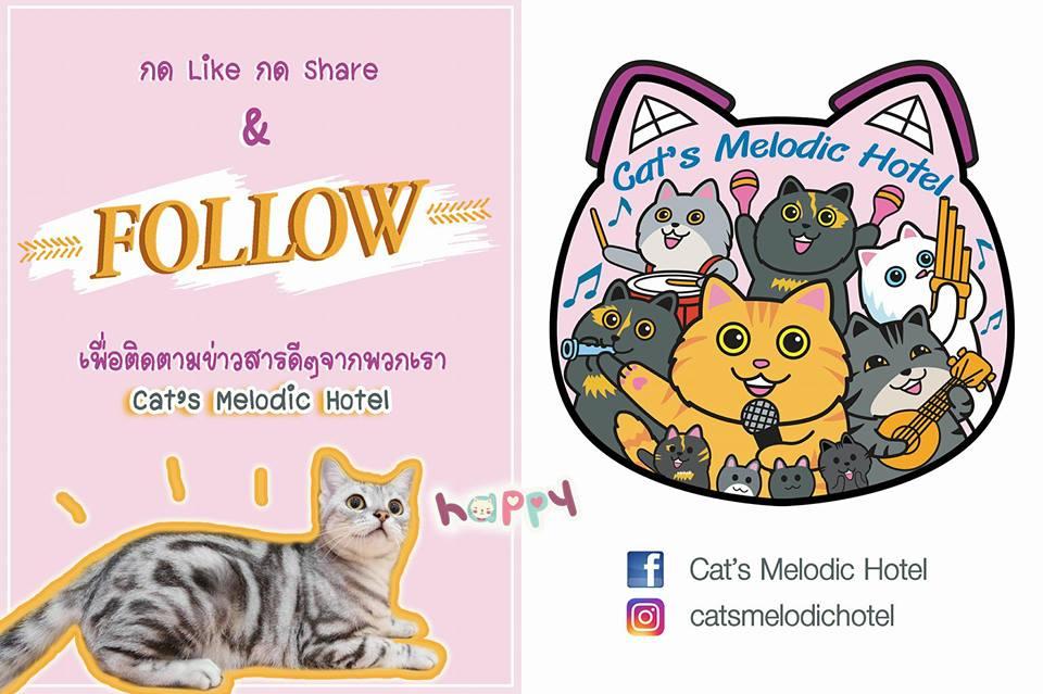 https://www.catsmelodichotel.com/wp-content/uploads/2018/01/Cats-melodic-hotel-1.jpg