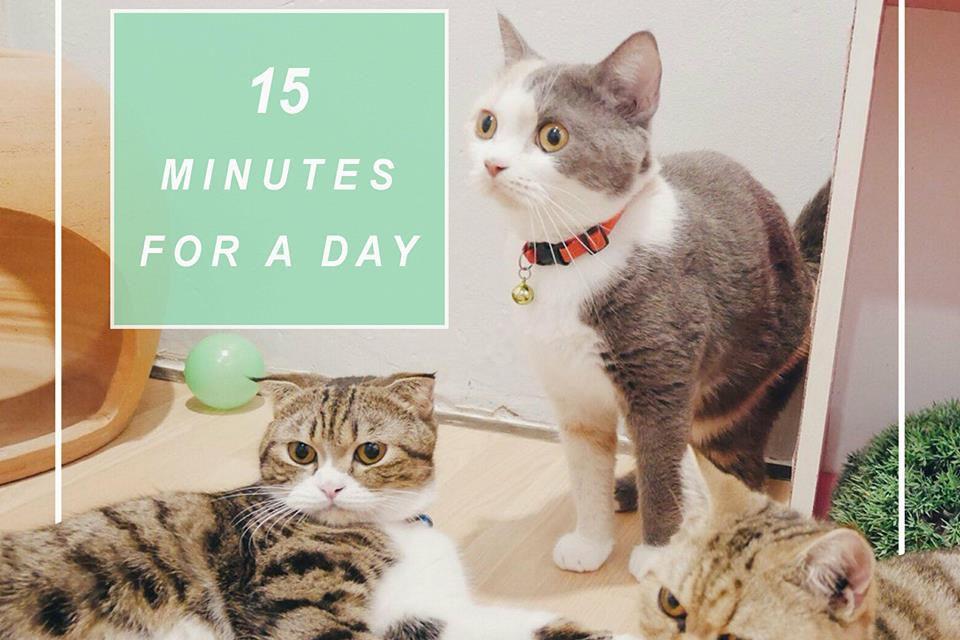 https://www.catsmelodichotel.com/wp-content/uploads/2018/01/Cats-melodic-hotel-3-960x640.jpg